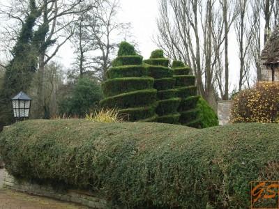 Формирование кроны хвойных и лиственных