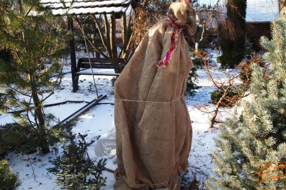 Новогоднее укрытие можжевельника
