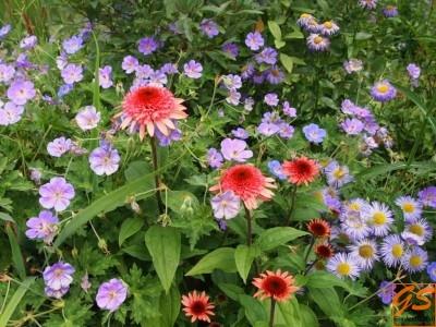 Сад злаков, цветение