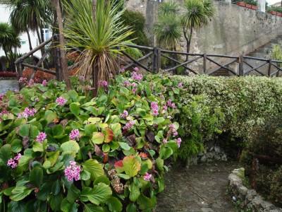 Бадан Villa Rufolo
