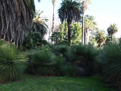 Коллекция пальм ботанического сада в Риме