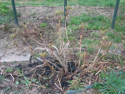Неправильная подготовка почвы