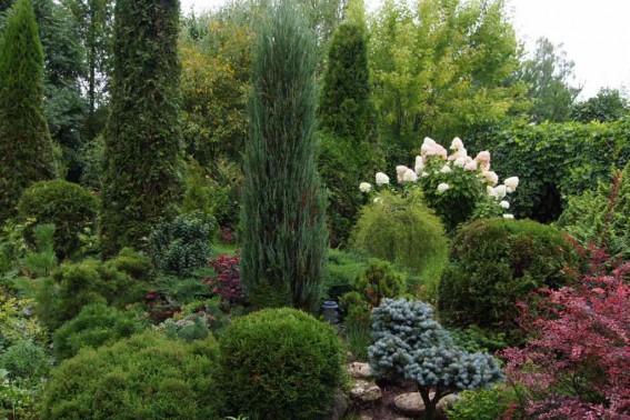 Рокарий Gardenschool 2014