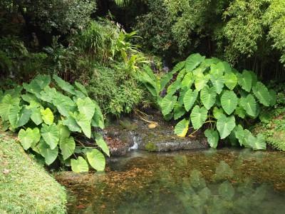 Водоемы романтического сада