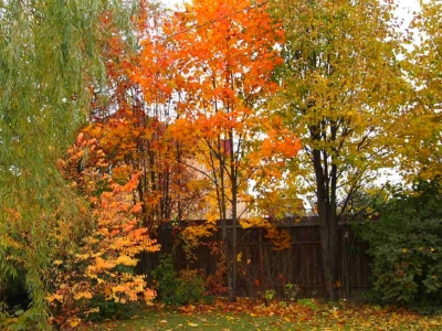 Осень GardenSchool