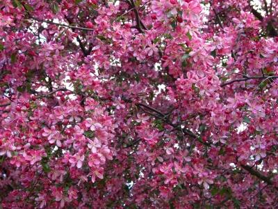 Весна GardenSchool