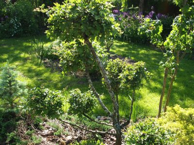 Формирование лиственных