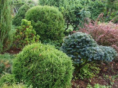 Как стрижка меняет облик растений