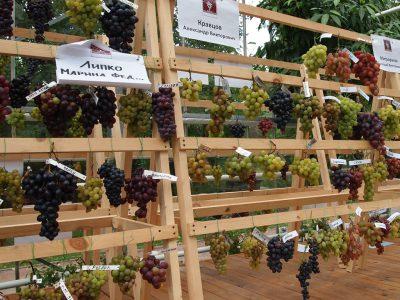 Выставка винограда