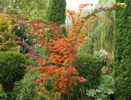 Календарь садовода октябрь 2016