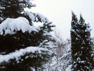 GardenSchool в снегу