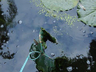 Чистка пруда