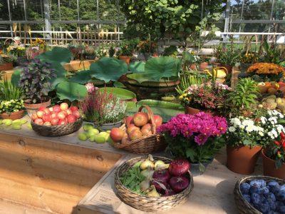 Плодовая выставка