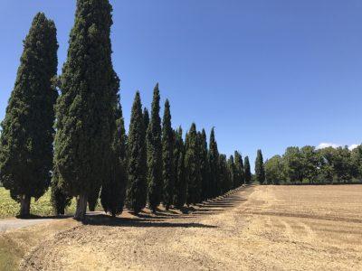 Тоскана кипарисовая аллея