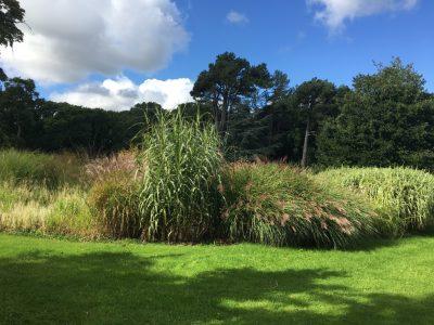 Коллекция злаковых растений