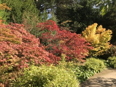 Осенние краски кленов