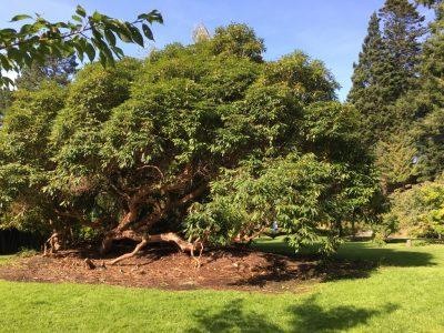 в японском саду Powerscourt Gardens