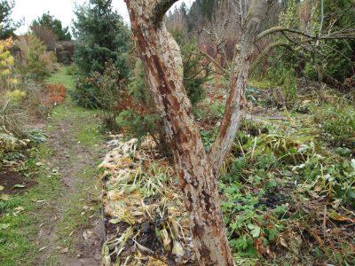 как защитить яблони от вредителей