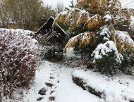 Календарь садовода на декабрь 2017