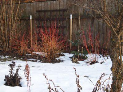 украшают зимний сад