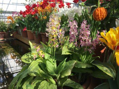 Цитрусовые и орхидейные