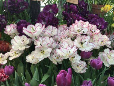 Тюльпаны фиолетовой гаммы