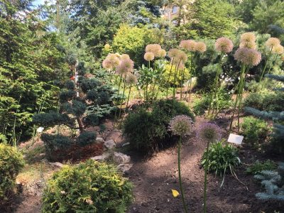 Луки в Ботаническом саду