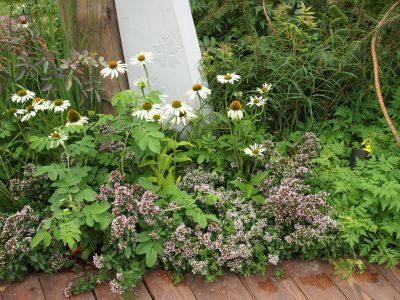 Карликовый тимьян в саду Хоровод