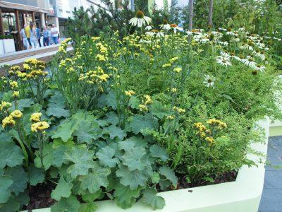 """Желтая часть сада """"В Потоке"""""""