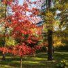 Осень в Аптекарском Огороде