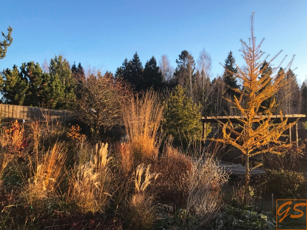 Календарь садовода на ноябрь 2018