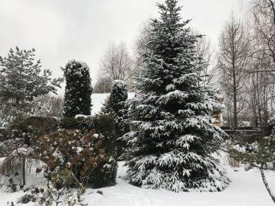 Снежный Декабрь