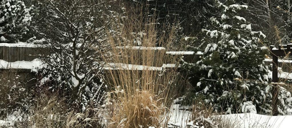Календарь садовода на декабрь 2018