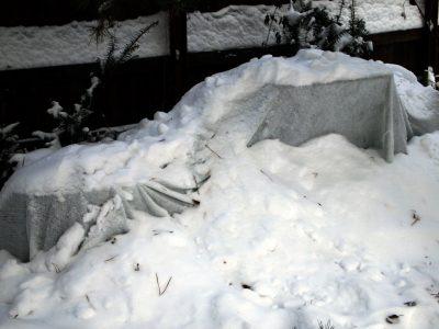 Утепление снегом приствольных кругов
