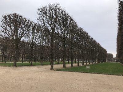 Аллеи Люксембурского сада