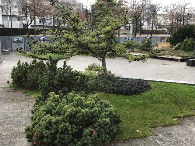 Черный сад