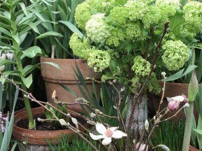 Цветы калины и магнолии