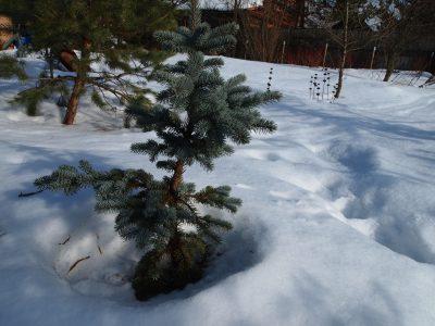В саду Garden School еще много снега