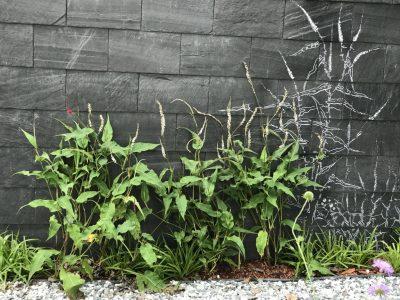 Фрагмент сада Эндем. Формула роста