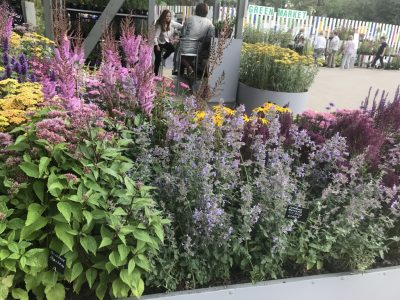 Сады и люди 2019