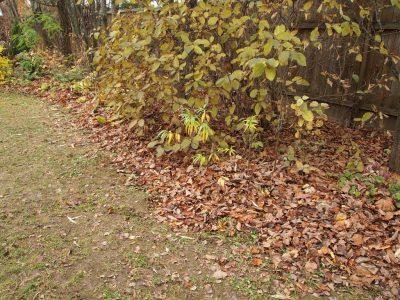 Сгребаем листву с газона