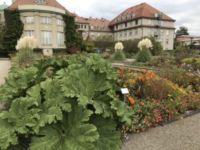 Парадная часть ботанического сада