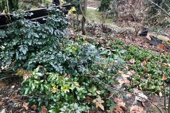 Зимнезеленые растения