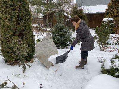 Снег для рододендронов