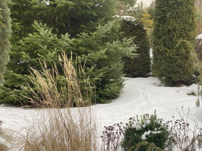 Зимний сад GardenSchool