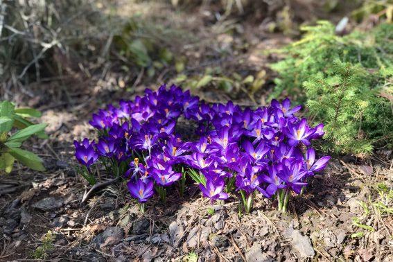 Календарь садовода на апрель 2020