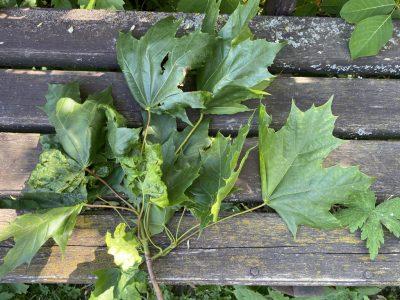 Реверсивная листва
