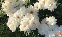 Календарь садовода на июнь-июль