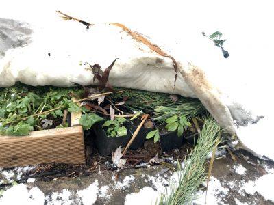 Зимовка растений в горшках