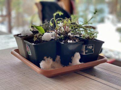 Хранение растений